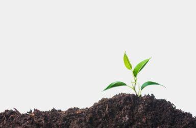 Brezskrbno delo z občutljivimi rastlinami